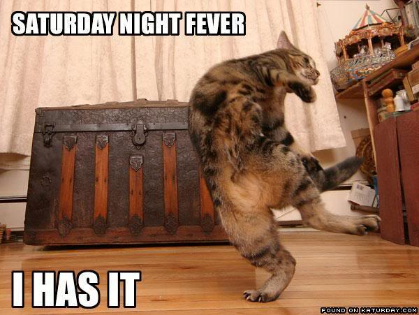 Cat-CatDancingSaturdayNightFever-1